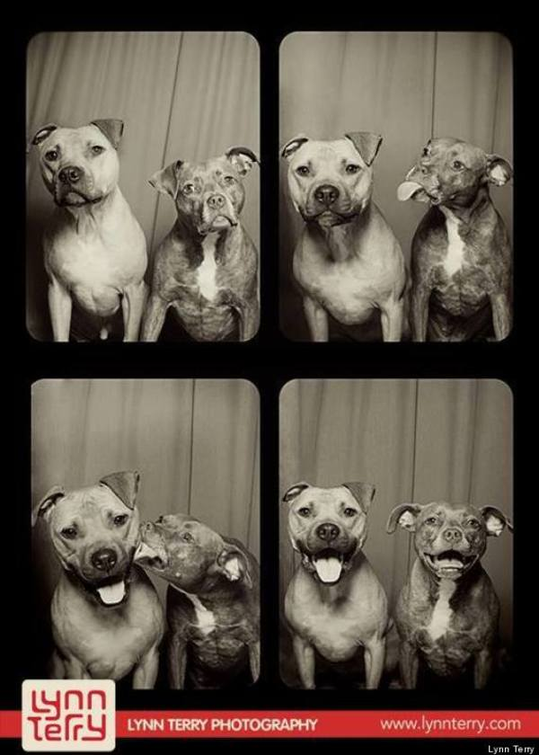 dog photobooth 1