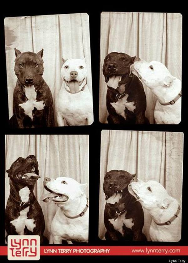 dog photobooth 3