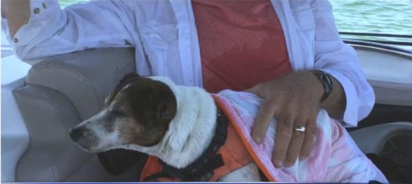 dog towel - Copy