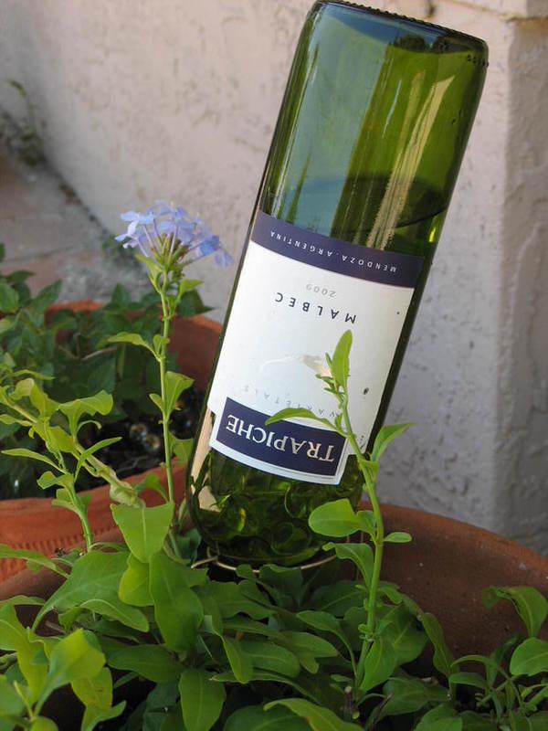 self-watering-ideas-wine-bottle