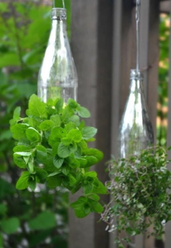 bottle-garden-e1459209611701