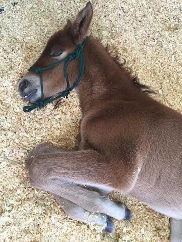 abandoned horse 8