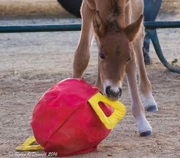 abandoned horse 9