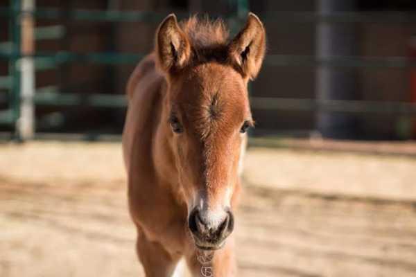 abandoned horse 10