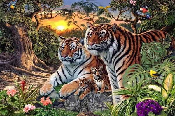 tigrar2