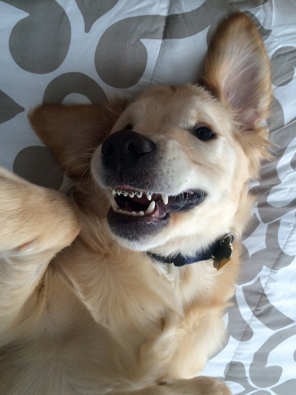 DOG  BRACES 10