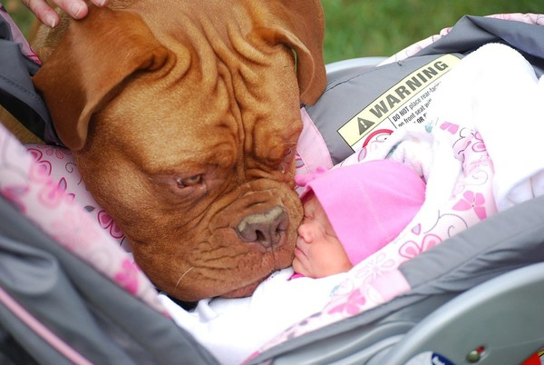 pups and babies 19