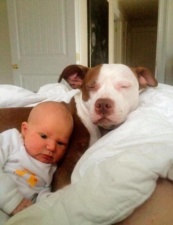 pups and babies 2