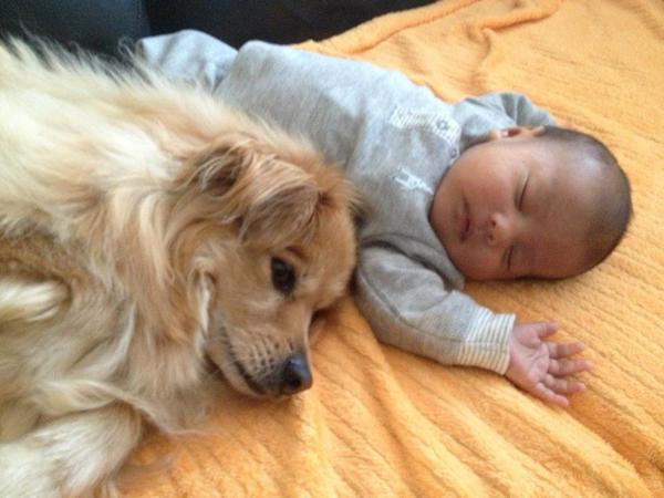 pups and babies 3