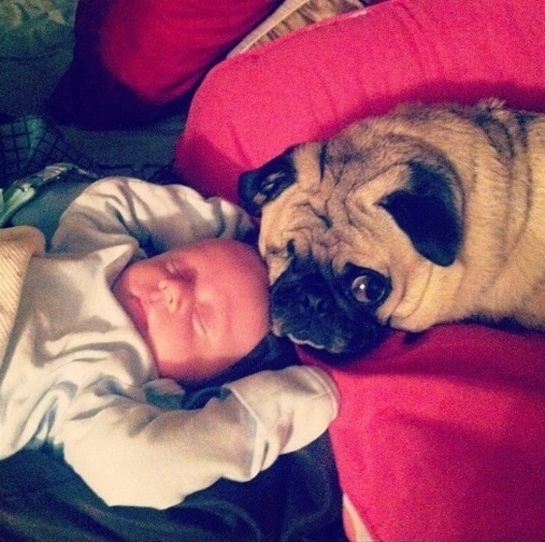 pups and babies 5