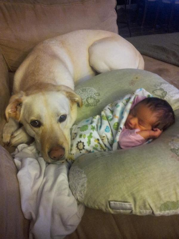 pups and babies 6
