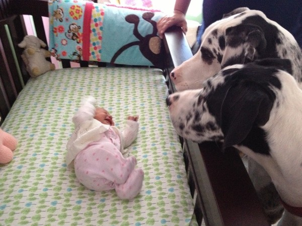 pups and babies 9