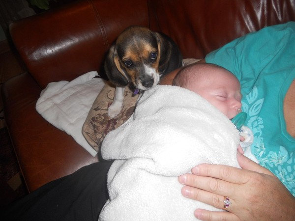 pups and babies 11