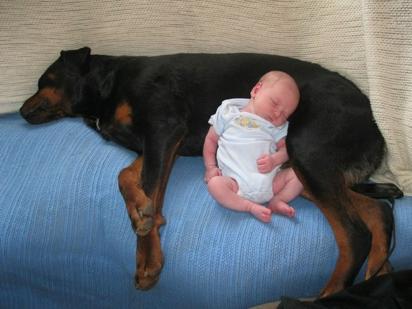 pups and babies 20