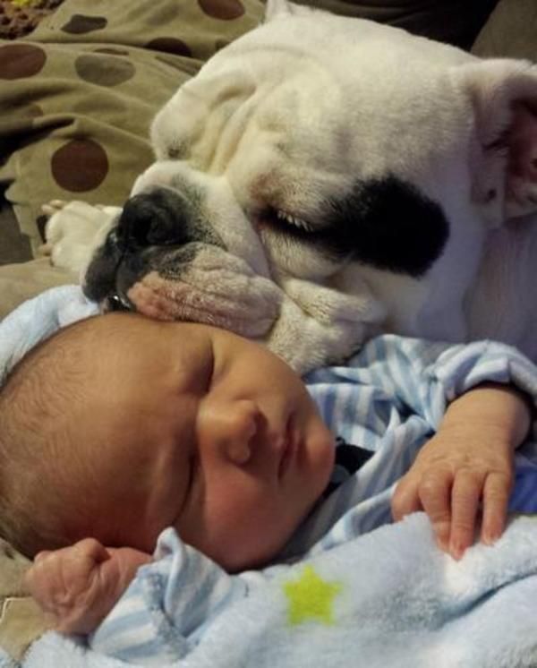 pups and babies 1