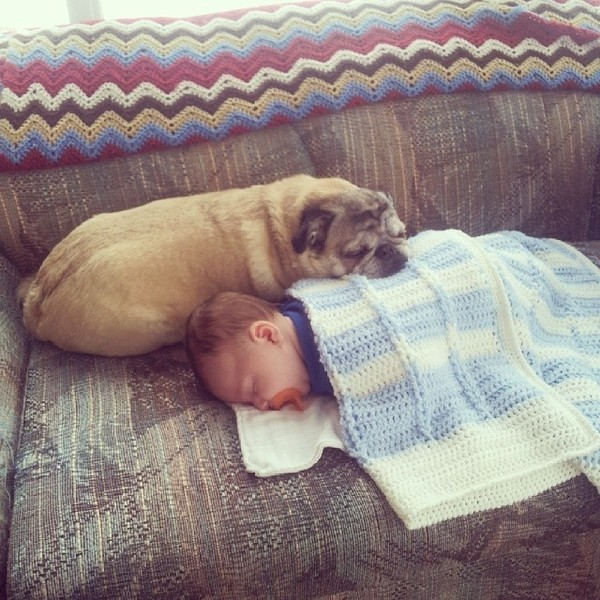 pups and babies 7