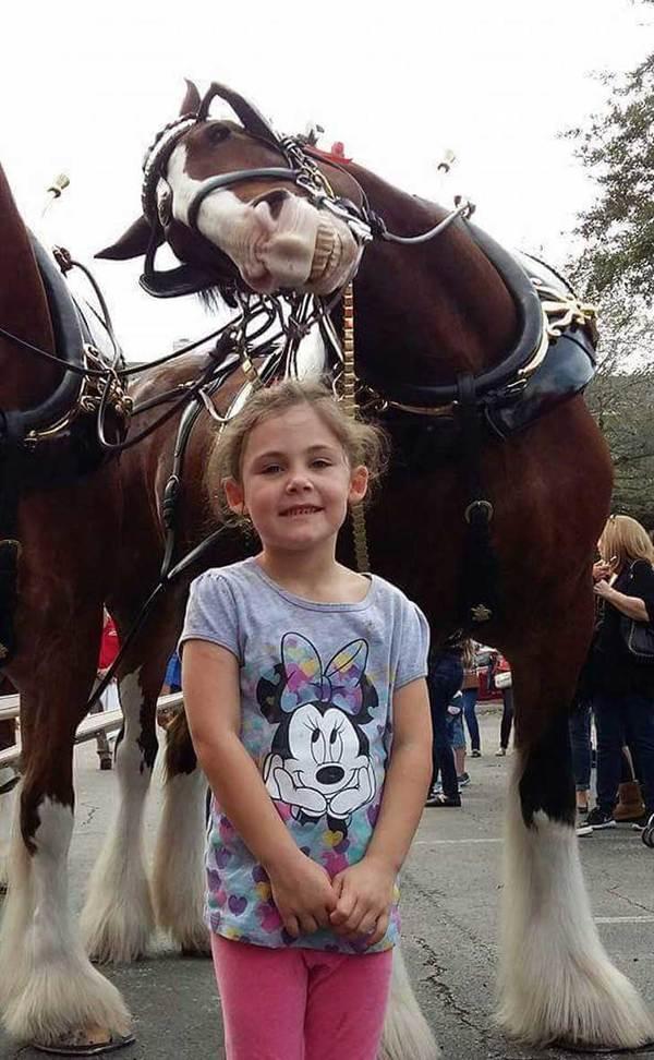 caballo 2