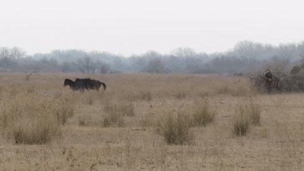 horse-2-gap.jpg
