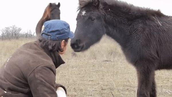 horse-6-gap.jpg