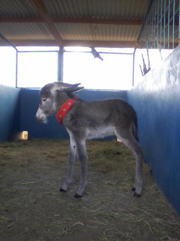donkey 5