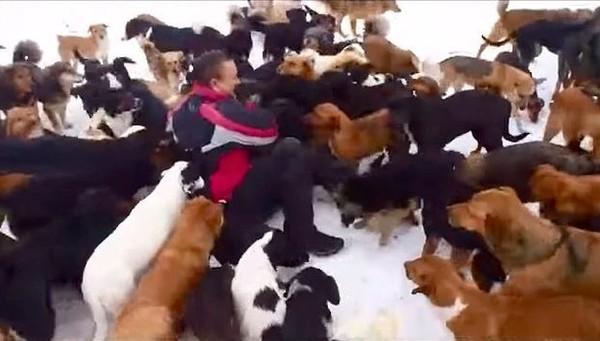 Dog rescuer 1