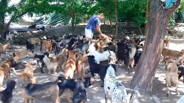 Dog rescuer 3