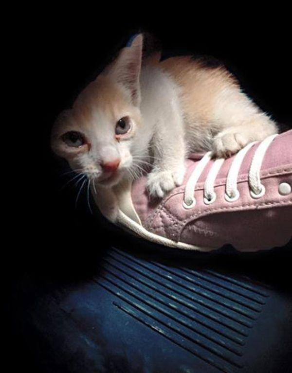 saved kitty 1