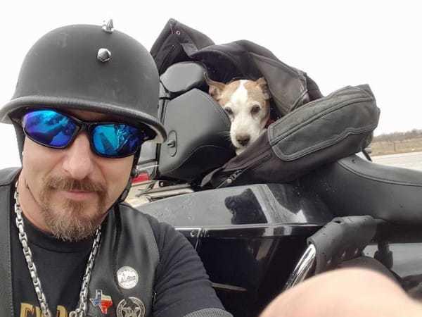 biker dog 2