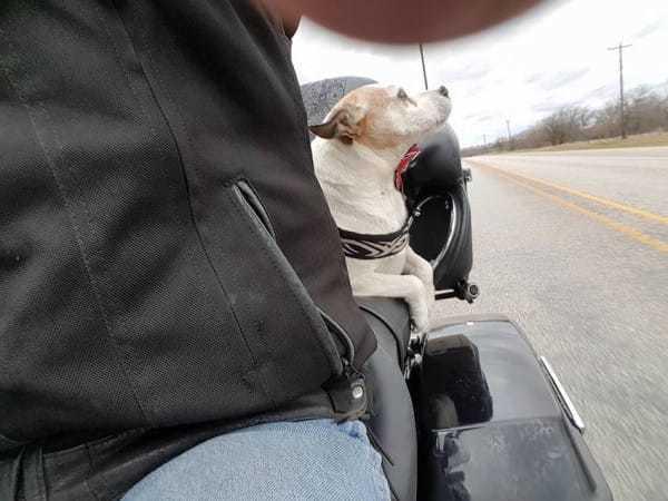 biker dog 1