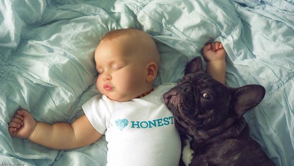 baby-dog-friendship-french-bulldog-ivette-ivens-8