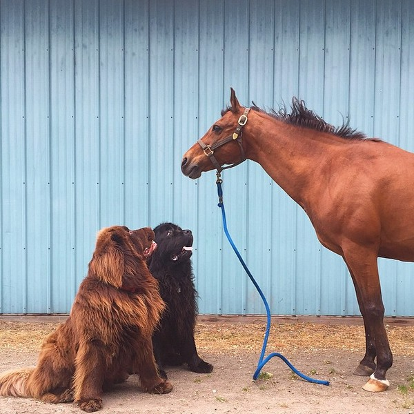 mom-photographs-son-dogs-horse-friendship-stasha-becker-julian-82
