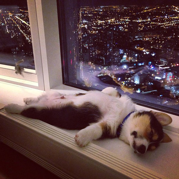 sleeping-puppy-5__605