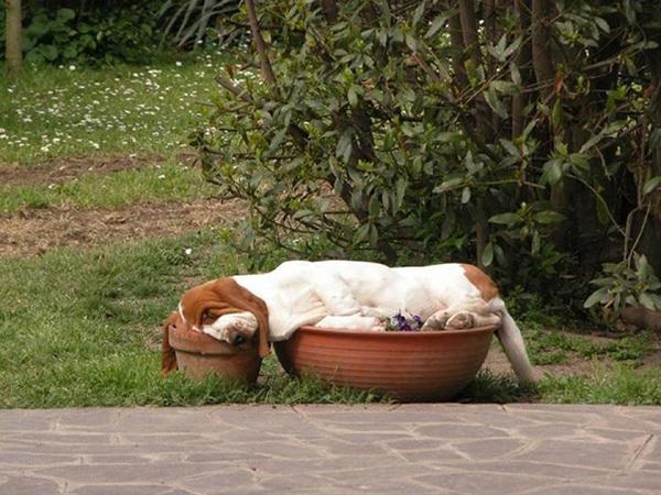 sleeping-puppy-56__605