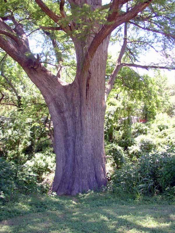 tree-trunk-crop001
