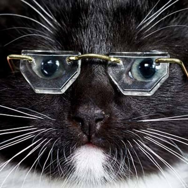 8-smartkatt