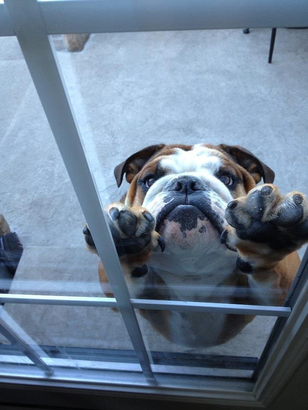 animals-asking-to-go-inside-37__605