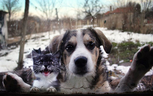animals-asking-to-go-inside-3__605