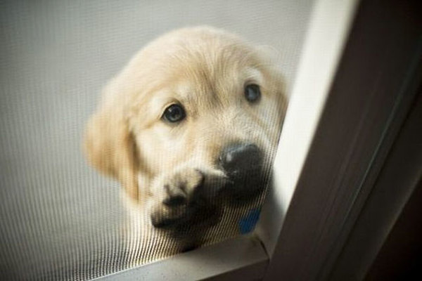 animals-asking-to-go-inside-1__605