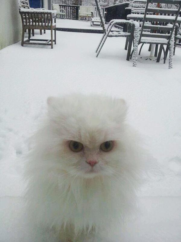 funny-animal-outside-door-let-me-in-8__605