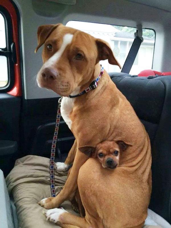 dog-best-friends-1__605