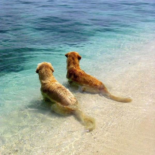 dog-best-friends-19__605