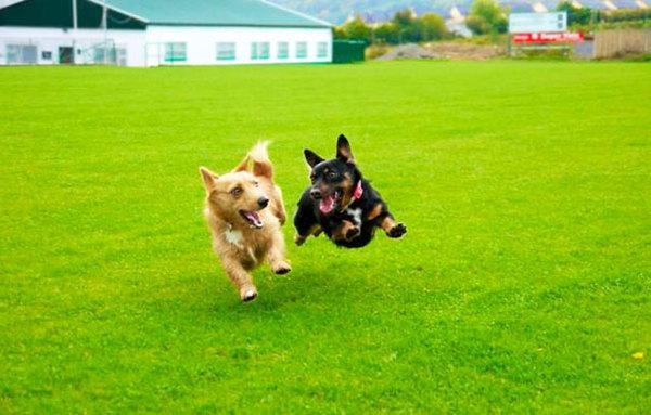 dog-best-friends-43__605