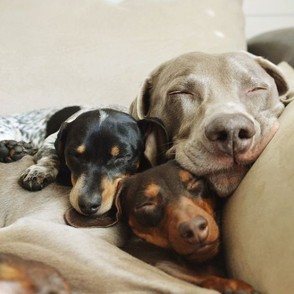 dog-best-friends-55__605