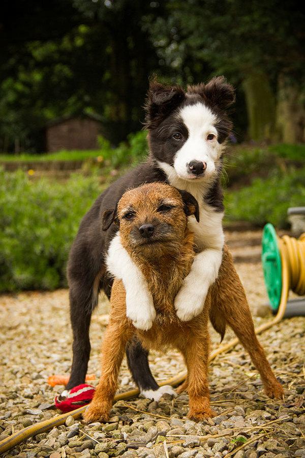dog-best-friends-57__605