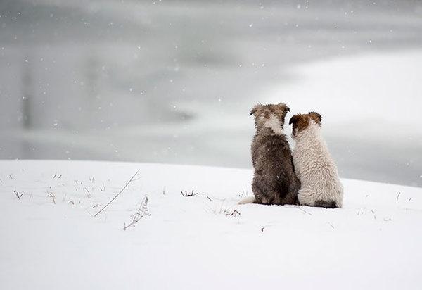 dog-best-friends-510__605