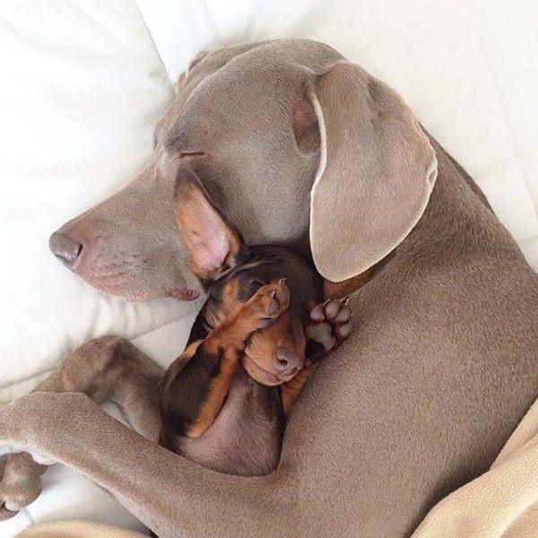 dog-best-friends-110__605