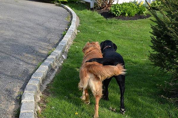 dog-best-friends-310__605