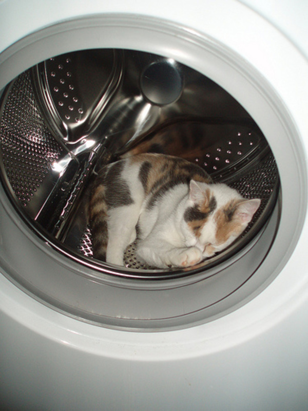 cat-funny-sleeping-in-washing-machine