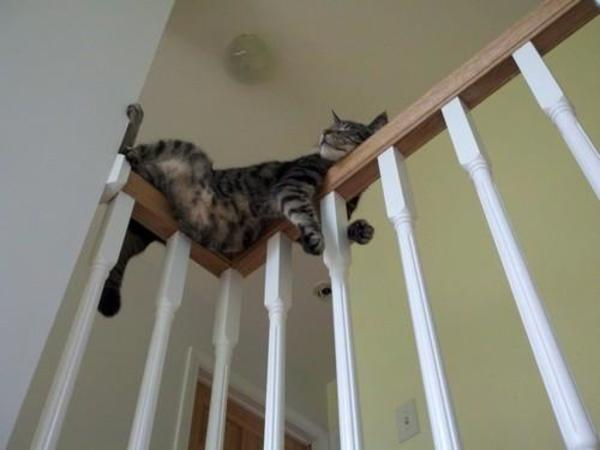 funny_cat_sleeping_on_stair_rail