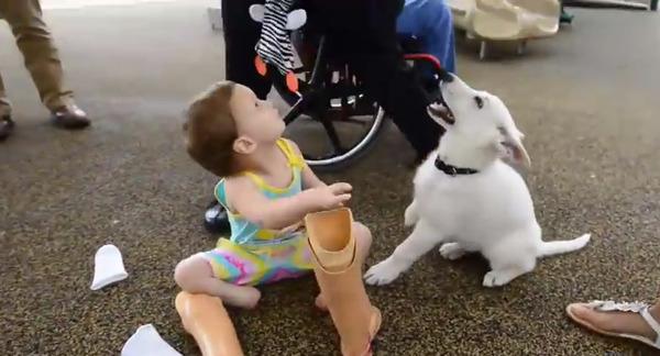 hundprotes